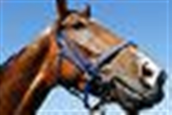 Government vet tested for Hendra
