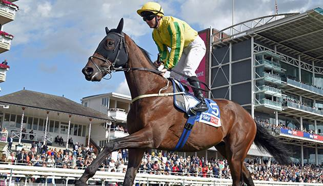 Irish stayer dumped as Cup favourite