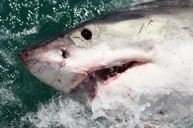 Sharks hit by injury to Stevens