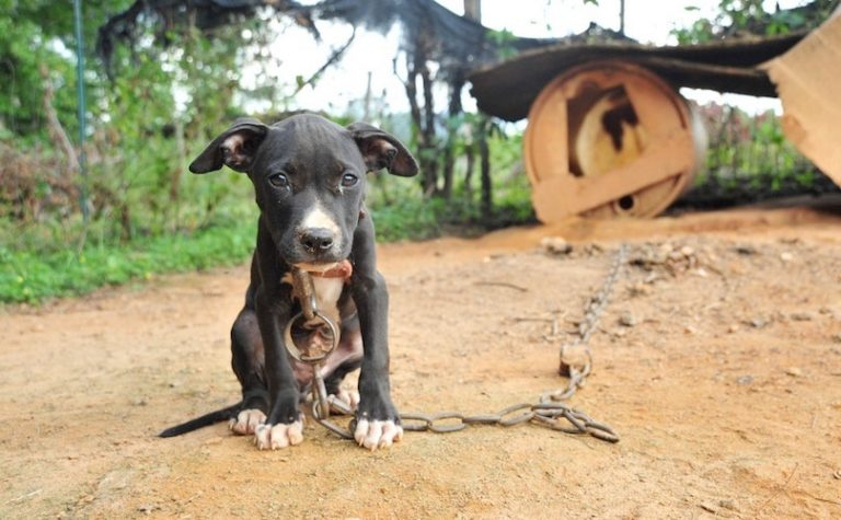 The sad truth about dogfighting