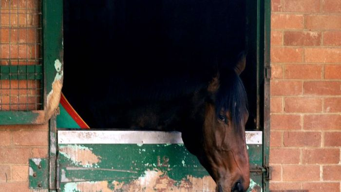 Horse flu confirmed in Qld