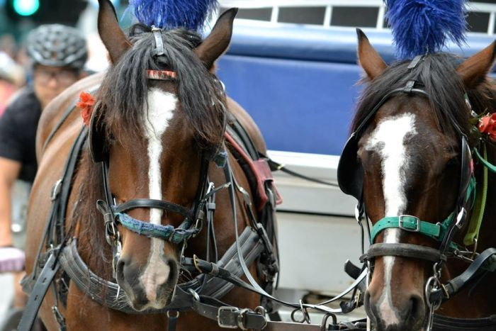 Horse owners caught flouting bans