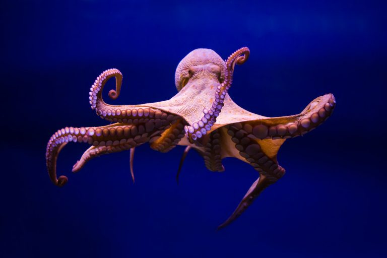 Is the octopus an alien?
