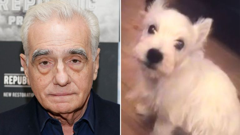 Martin Scorsese's dog accused of attacking nurse