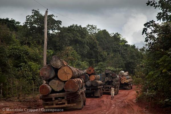 The 'Guardians of the Amazon' stand up to illegal logging in the jungle