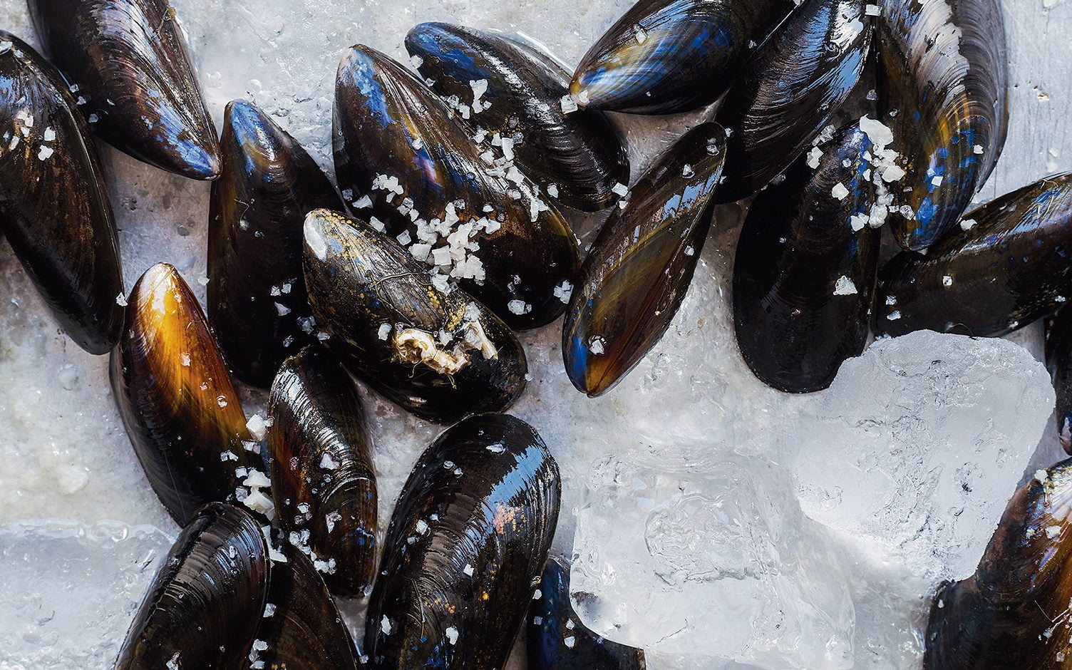 Traces of opioids found in mussels in Puget Sound near Seattle