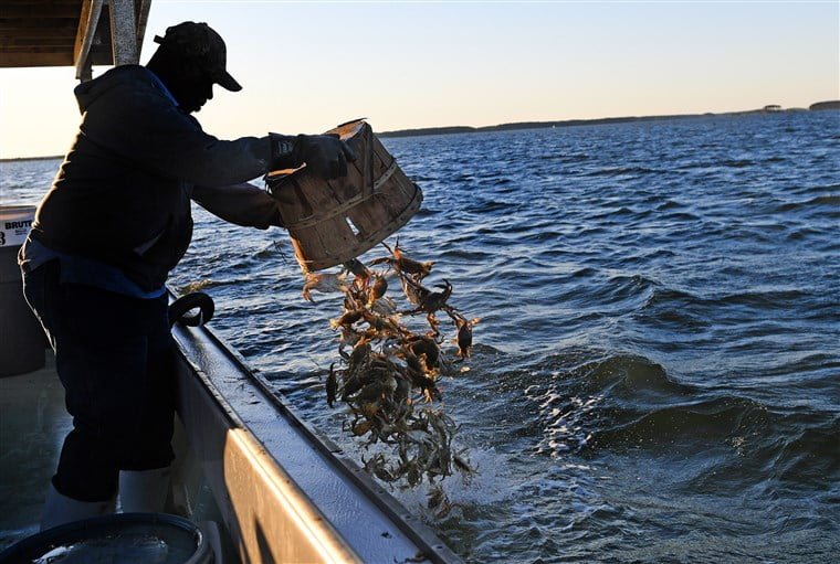 Trump adds 15,000 work visas. But is it too late for shell-shocked crabbers?