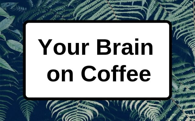 What caffeine does to your brain and why you love it
