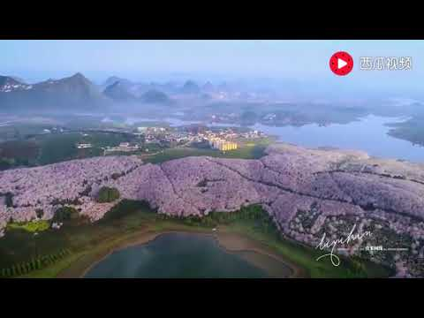 Blossom in south-west China captured by drone