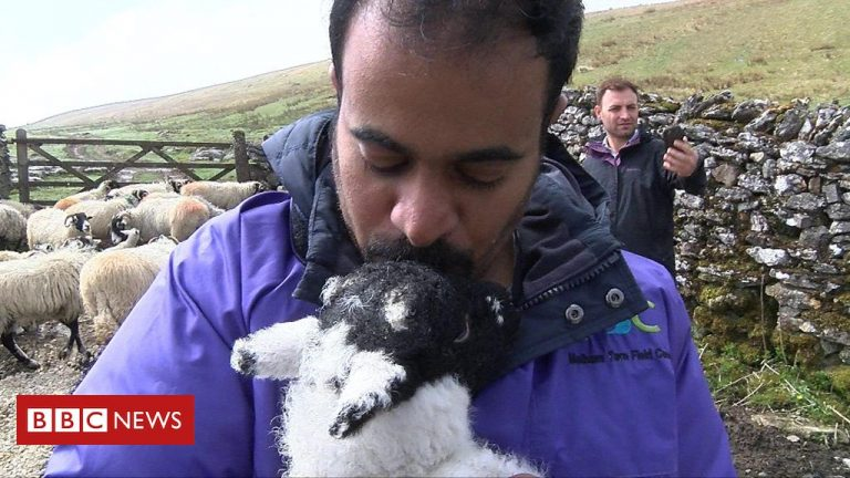 Crossing Divides: Yorkshire Dales farmer works with asylum seekers