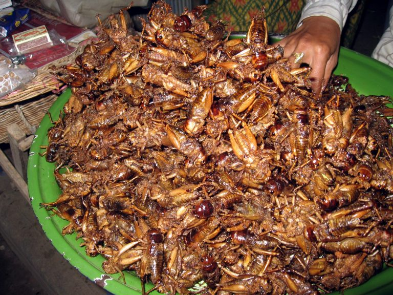 How to start a chapulines business