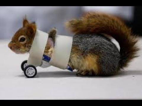ICYMI: A squirrel on wheels and a drone failure