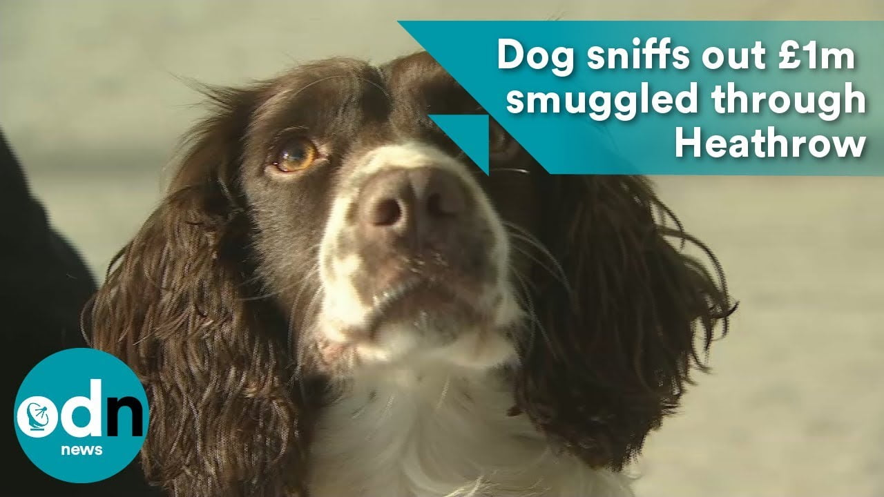 Meet the dogs fighting Heathrow Airport smugglers