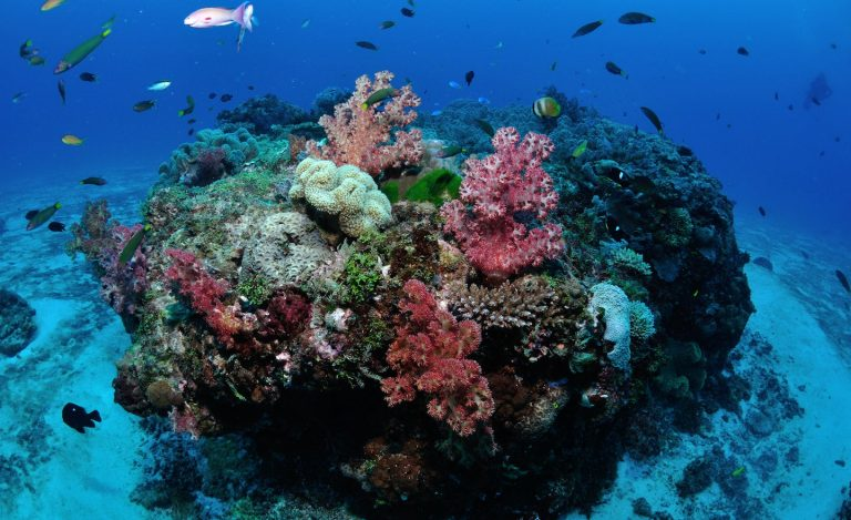 This is what coral reefs sound like