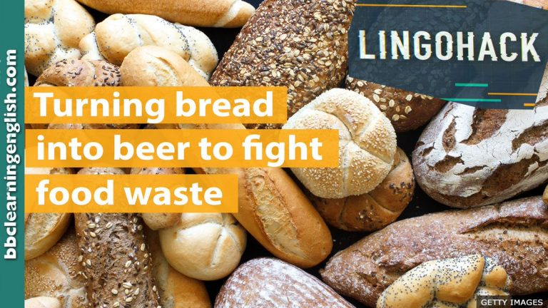 Turning bread into beer to fight food waste