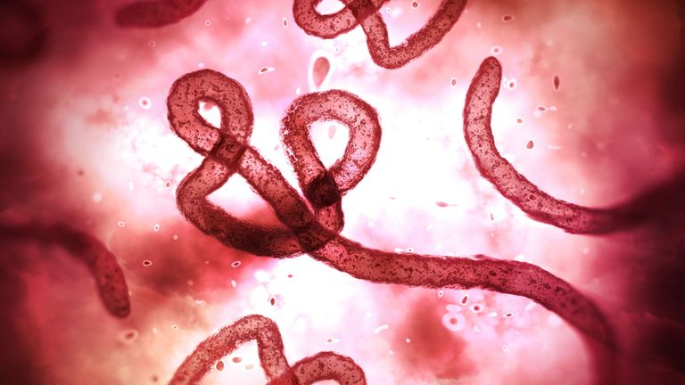 Two cases of Ebola confirmed in Congo
