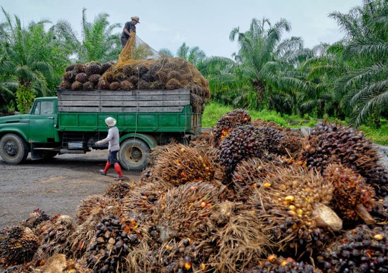 Why the use of palm oil is so controversial