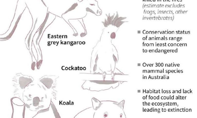 Forest fires leave the population of koalas in southeastern Australia closer to extinction