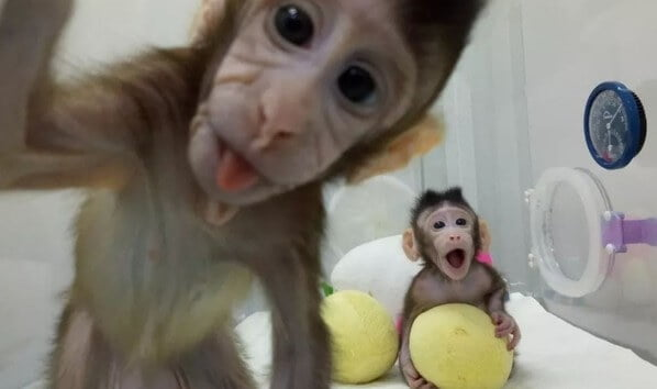 China clones two monkeys in world first
