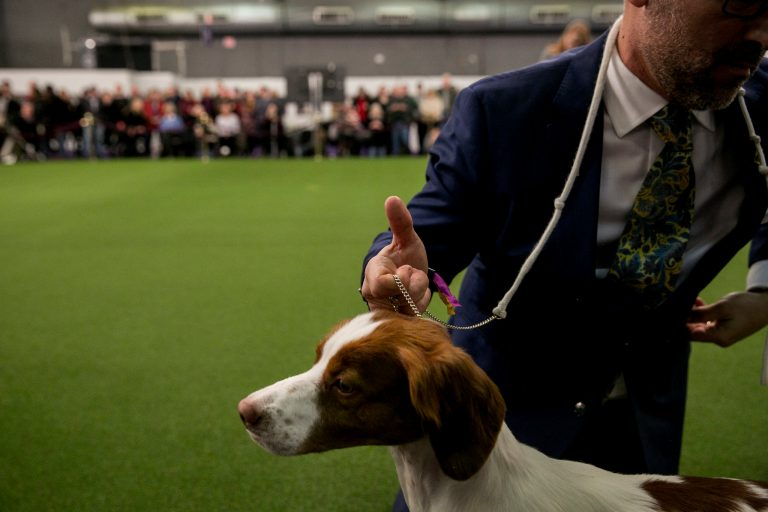 Live Briefing: Westminster Dog Show 2018: Flynn Is Best in Show