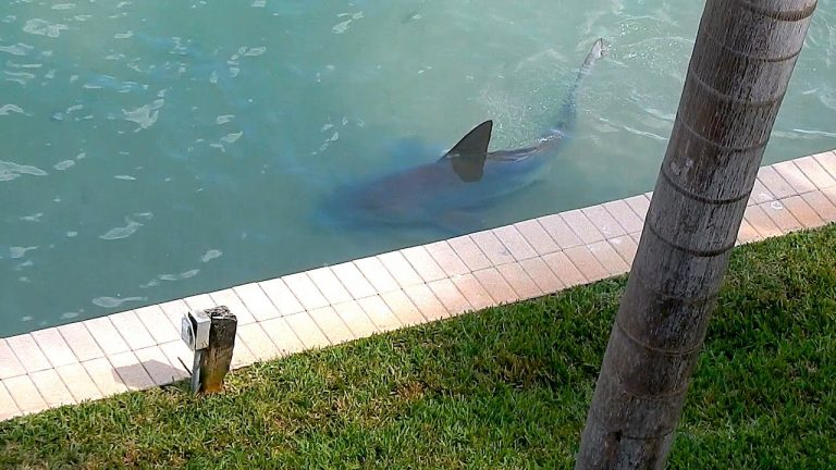 Living with a shark on your street