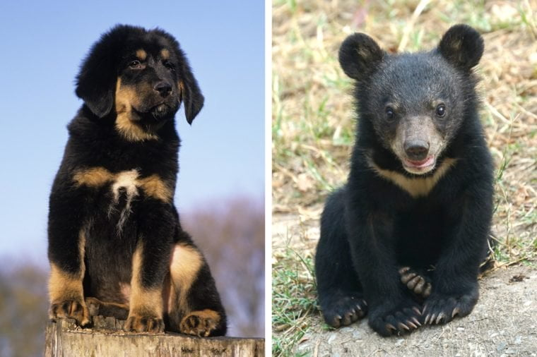 Man who shares his house with leopards and bears