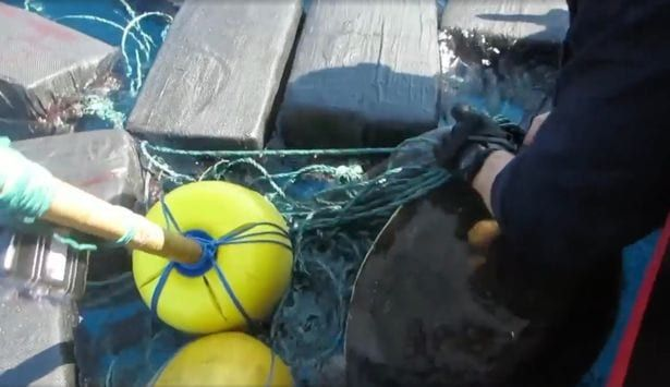 Sea turtle found tangled in floating cocaine bales