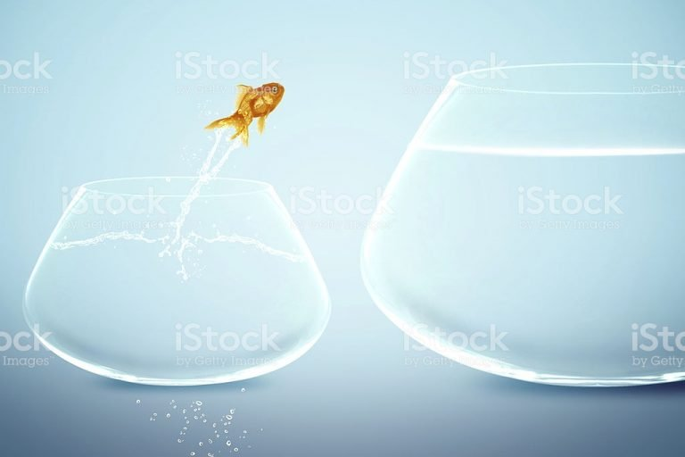 The boy who created a fishbowl of opportunity