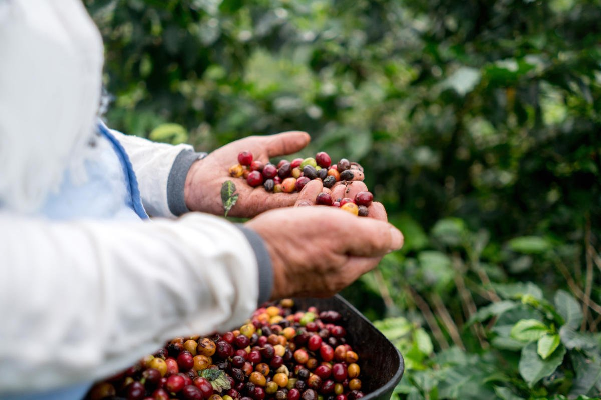 How blockchain technology supports coffee bean registration and traceability