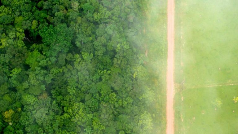 Blockchain technology is helping to reduce the impact of deforestation in Brazil