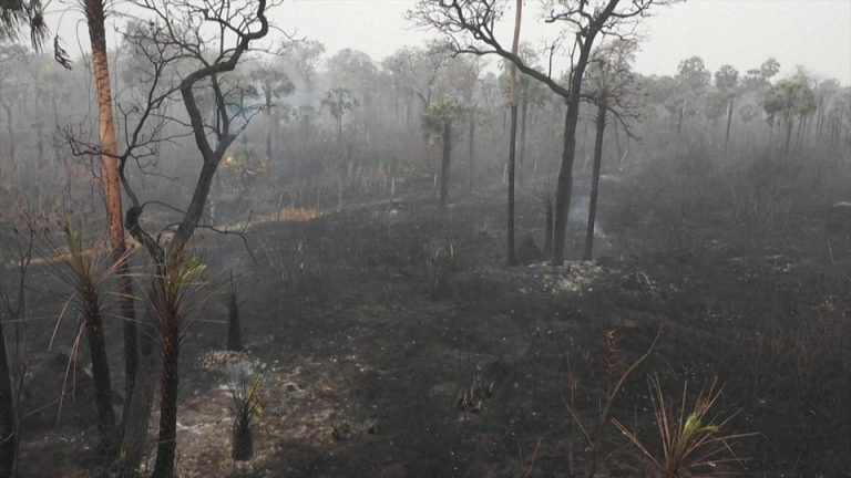 The Bolivian government will declare an emergency over the Chiquitanía fires and blame Morales