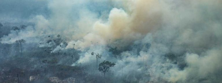 The destruction of the Amazon rainforest in Brazil continues unchecked, warns NGO