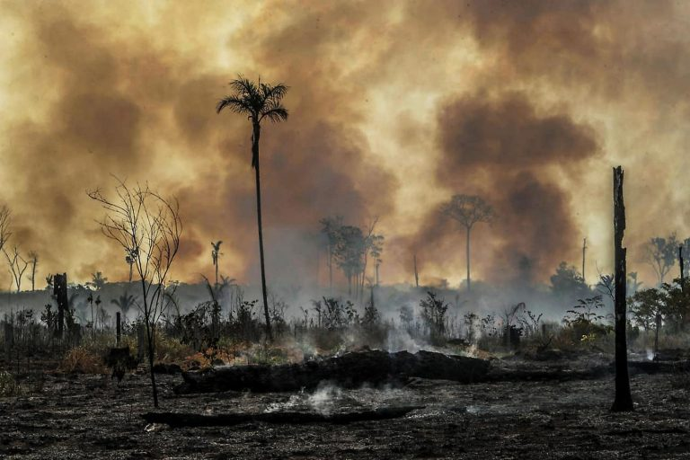 "Bolsonaro confirms that there are no ""not hectares"" of destroyed forest in Brazil"