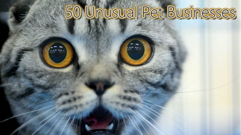 Business idea! Another suggestion: massages for pets!