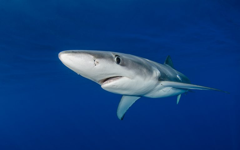 If you are scared of sharks, don't pay attention
