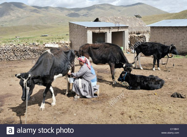 The cattle ranch in Bolivia will have a sign for cattle digital trade